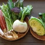 野菜の販売始めました!