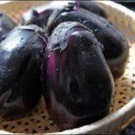 《[次回は7月18日!]夏野菜、続々!!》【京都産 自然栽培の野菜マルシェ】