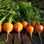 マルシェは明日!《『ミシェル畑』のお野菜☆》【京都産 自然栽培の野菜マルシェ】