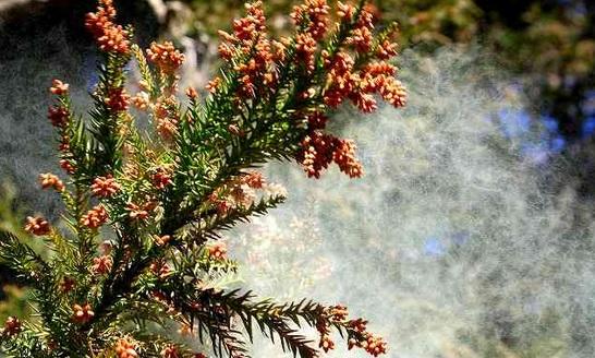花粉が飛び散る様子