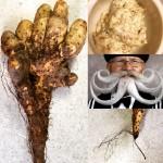 【《『ヒゲを焼き切る』のが、ポイント!!》あ、自然薯の話です。『野生の自然薯』販売開始!】