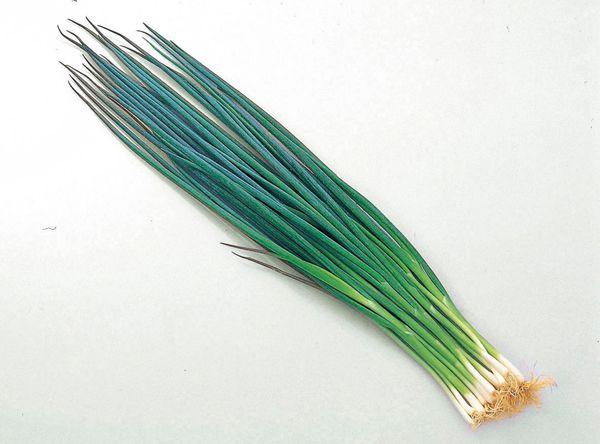 【葉ネギ(洛楽黒葱)】 滋賀県県 守山市産 150g