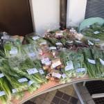 【〈明日朝11時まで〉ワケあり野菜】昨日はマルシェでした!