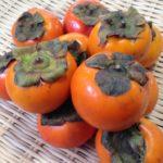 【『昔ながらの柿』販売スタート!!《懐かしい美味しさ》京都 丹波産の柿】
