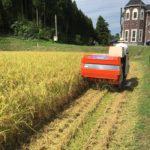 《栽培期間が長い分、栄養価も高い。》古来種のお米『旭』。【『早生』と『晩生』について。】