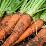 《明後日です!》【お弁当の販売もします!!】【京都産 自然栽培の野菜マルシェ】