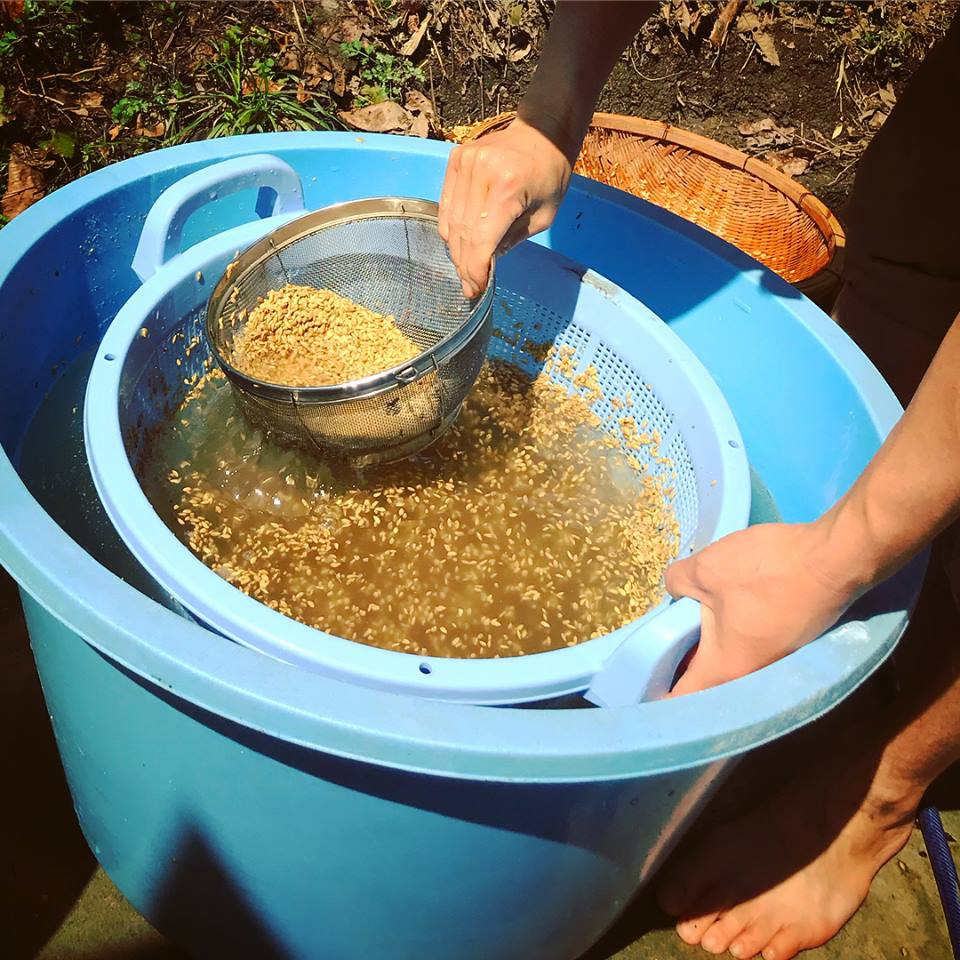 【ファスティング後の回復食の準備。《古来種米『旭』》自然栽培のお米】京都 丹波産 無農薬の野菜