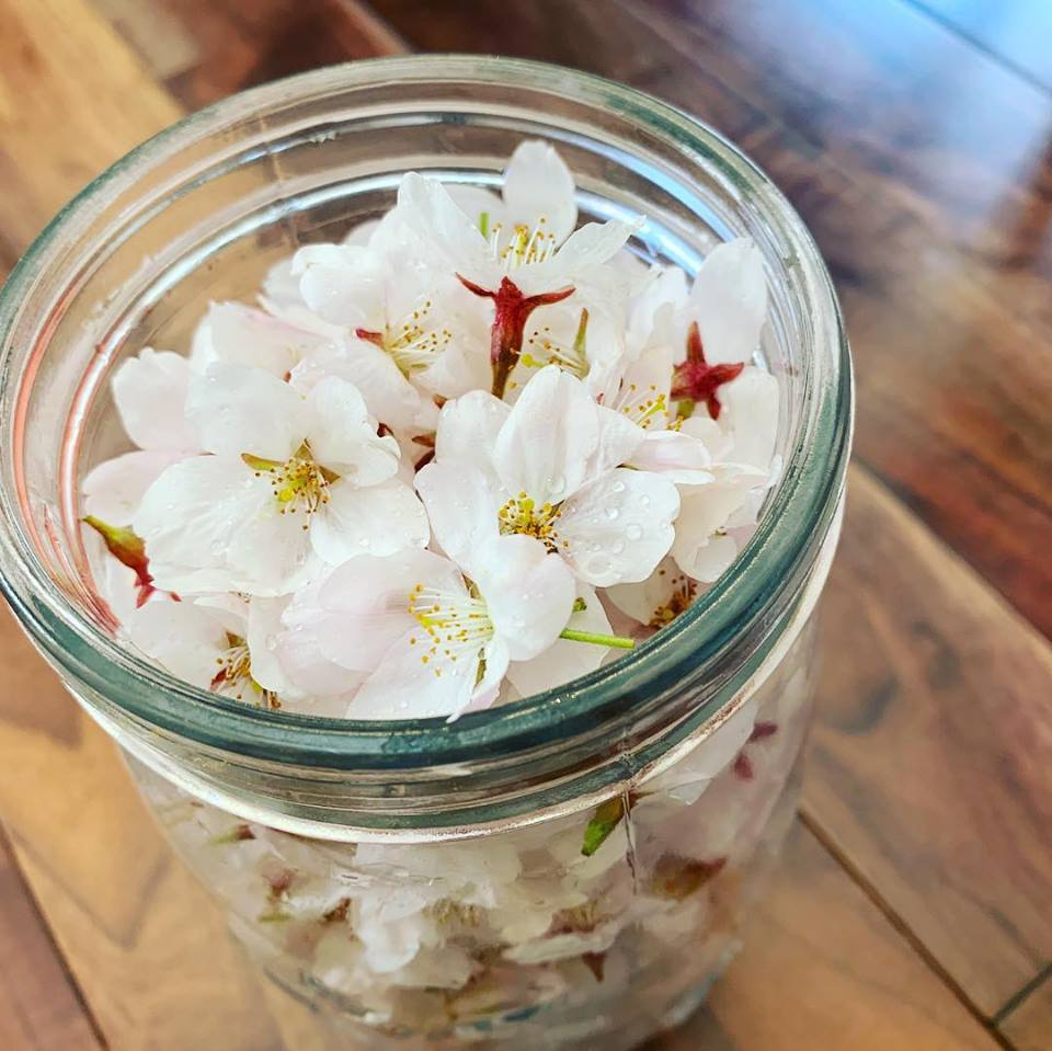 Lip Balm of Cherry Blossoms 【《Scent of Japan[spring]〜日本の薫香 [春]〜》桜のリップバーム】(15g)